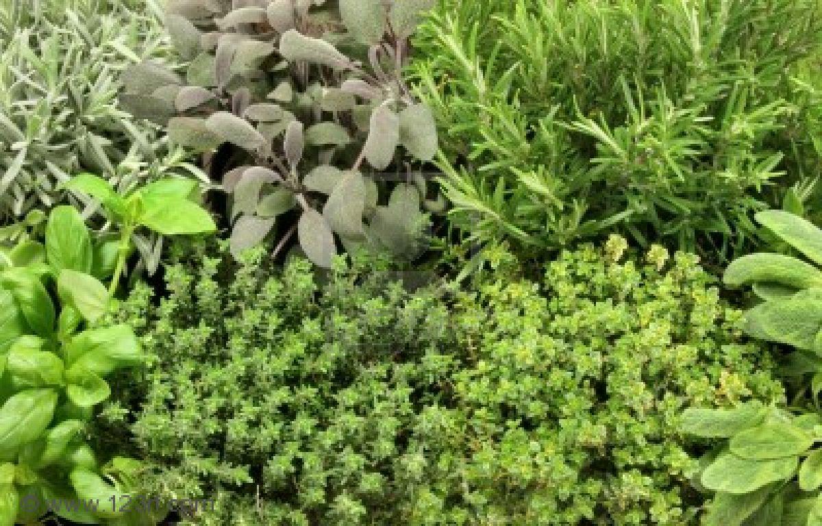 Quali erbe aromatiche in casa ricetta da cucinare - Erbe aromatiche in casa ...